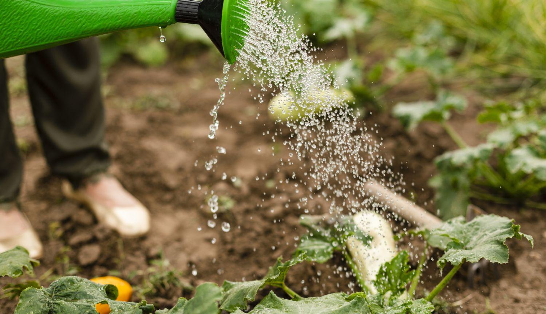 ปลูกผักแบบขั้นบันได